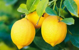 lemons-health-benefits