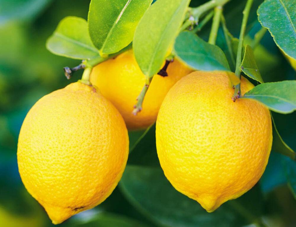 8 Evidence-Based Health Benefits of Lemons